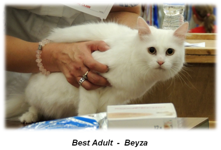 Beyza - Best Adult