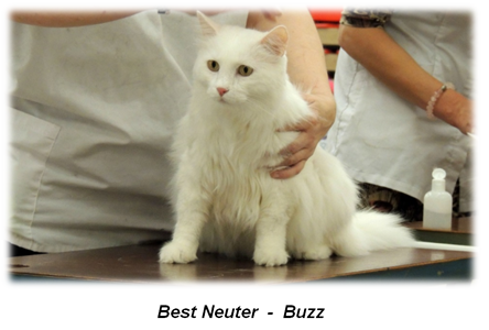 Buzz - Best Neuter